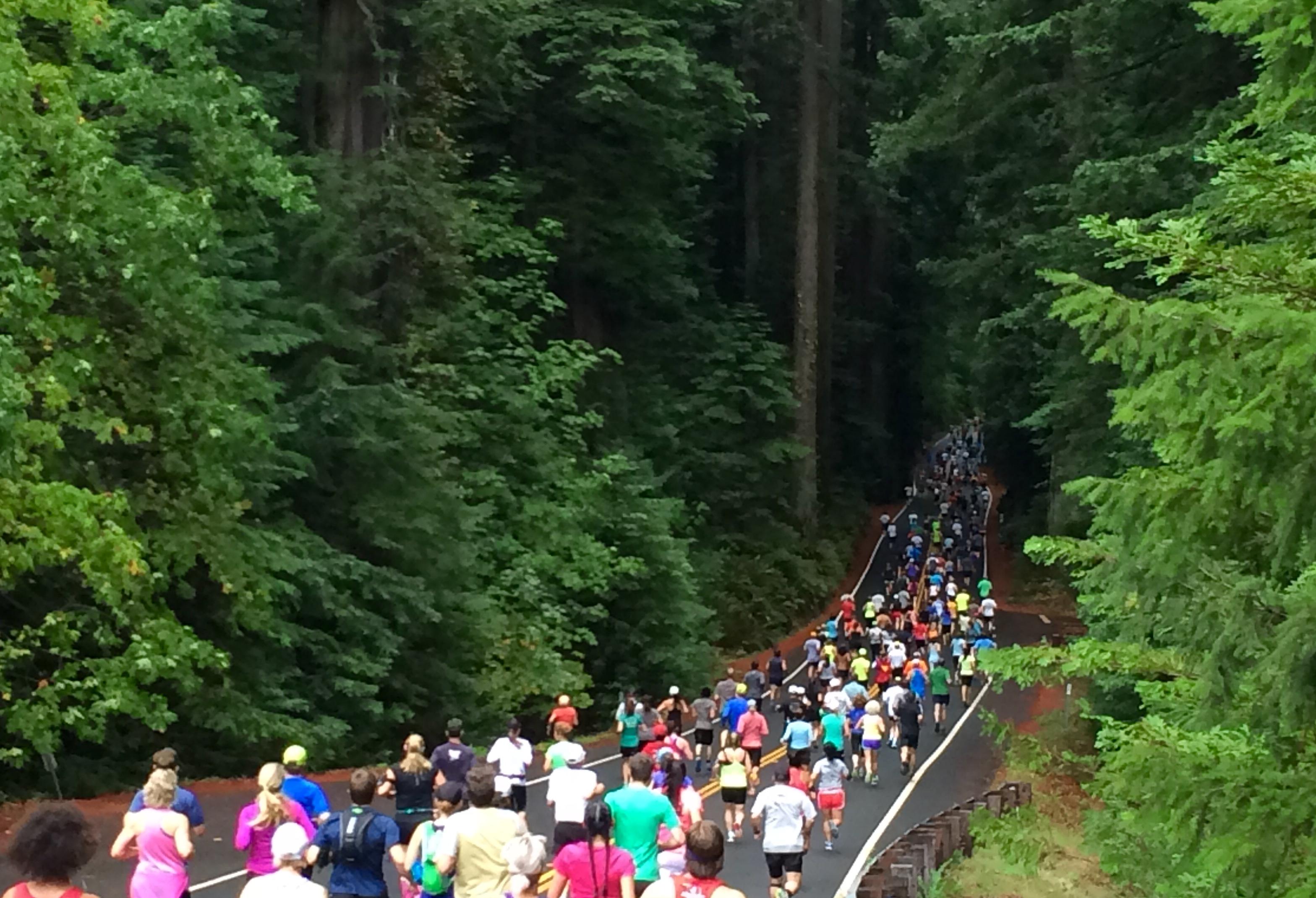 Humboldt Redwood Marathon   Half Marathon - Weott 2560ffd13866