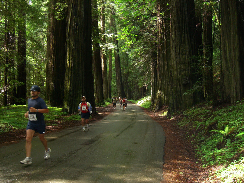 Ave of the Giants Marathon & Half Marathon