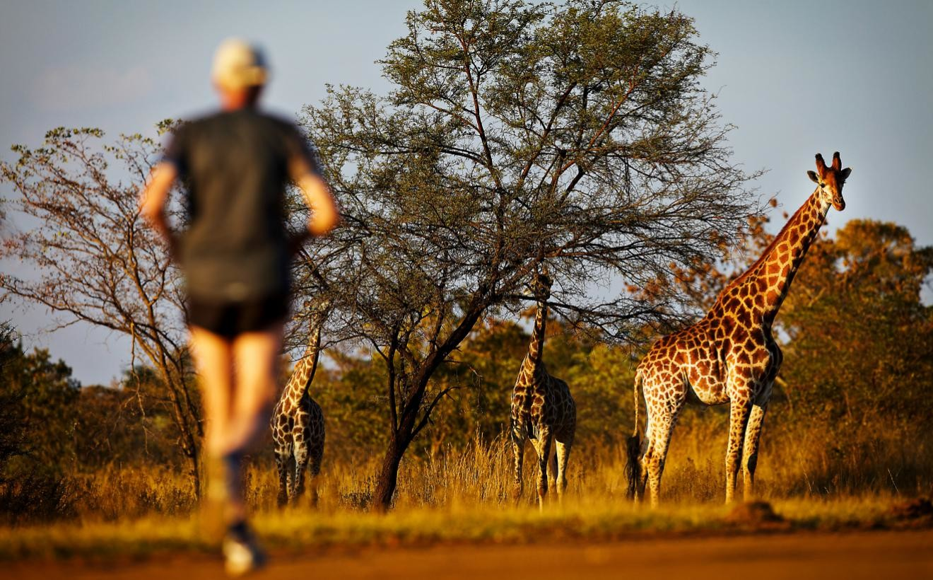 The Big Five Marathon in South Africa is held among the wildlife of the African savannah.